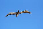 Rx10birds