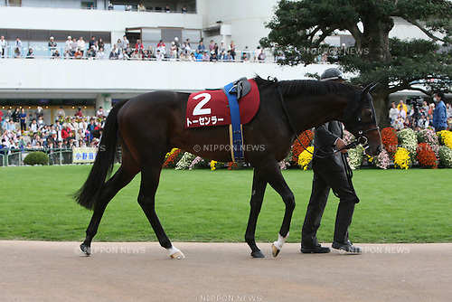 Tosen Ra,<br /> OCTOBER 14, 2014 - Horse Racing :<br /> Tosen Ra is led through the paddock before the Kyoto Daishoten at Kyoto Racecourse in Kyoto, Japan. (Photo by Eiichi Yamane/AFLO)