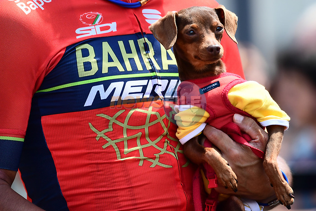 Bahrain-Merida team dog at sign on for Stage 5 of the 2018 Criterium du Dauphine 2018 running 130km from Grenoble to Valmorel, France. 8th June 2018.<br /> Picture: ASO/Alex Broadway | Cyclefile<br /> <br /> <br /> All photos usage must carry mandatory copyright credit (© Cyclefile | ASO/Alex Broadway)