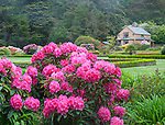 Shore Acres State Park, OR: The Simpson Estate Garden in spring featuring azaleas and rhododendrons in bloom.