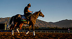 October 30, 2019: Breeders' Cup Turf entrant Bandua, trained by Jack Sisterson, exercises in preparation for the Breeders' Cup World Championships exercises in preparation for the Breeders' Cup World Championships at Santa Anita Park in Arcadia, California on October 30, 2019. Scott Serio/Eclipse Sportswire/Breeders' Cup/CSM