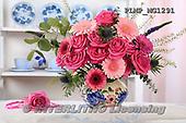 Marek, FLOWERS, BLUMEN, FLORES, photos+++++,PLMPMG1291,#f# roses