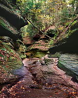 The dark, lush, and narrow part of Turkey Run's Rocky Hollow requires most people to take the slender path up along the rock ledge.  The steps, carved long ago, have been worn smooth by countless numbers of people visiting this wonderful spot.