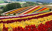 Hokkaido Furano flowers