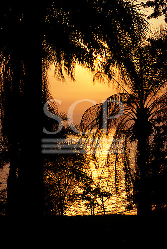 Burundi. Beautiful bronze sunset with palm trees silhouetted against the sky and Lake Tanganyika.