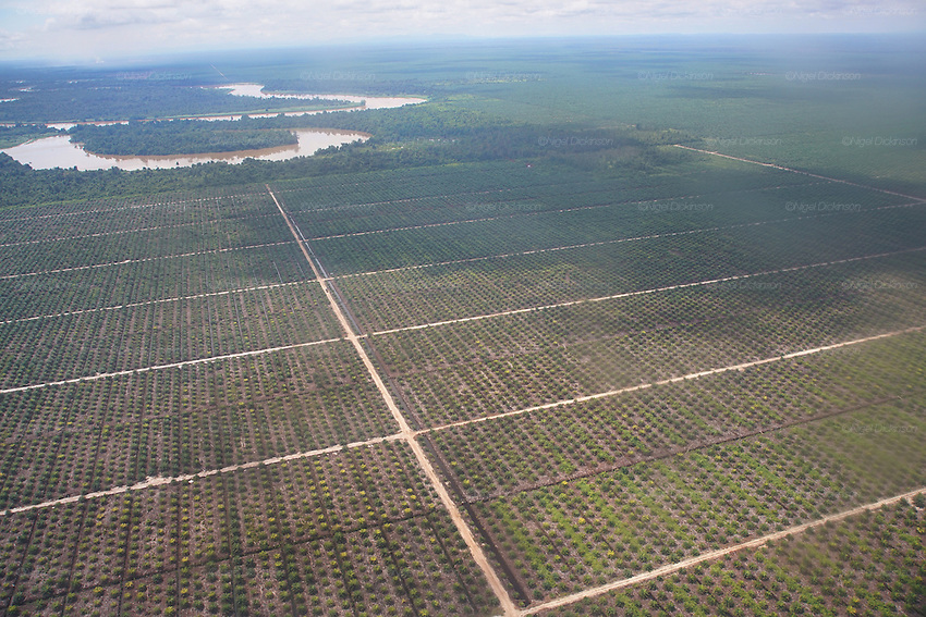 Aerial photography overlooking thousands of hectares of palm oil plantations. This was originally unspoilt primary rainforest. Marudi, Sarawak, Malaysia 2015<br />