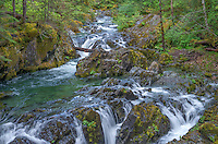 ORCAN_D102 - USA, Oregon, Willamette National Forest, Opal Creek Scenic Recreation Area, Multiple small falls and swift flow of Opal Creek with surrounding old growth forest.
