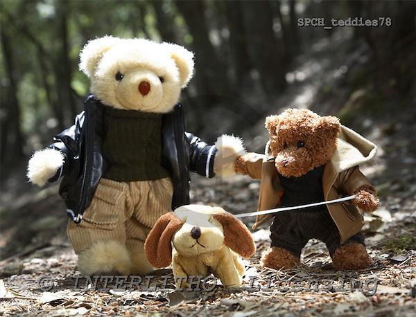 Xavier, CUTE ANIMALS, teddies, photos, SPCHTEDDIES78,#ac#