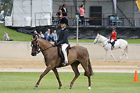 Lightweight Hunter Pony NE 12.2hh