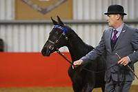WPCS Foal Show