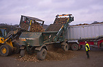 A3AAX5 Sugar beet being loaded by tractor onto lorry trailer for transport