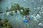 A river raft has become stuck on the shallow rocks of the Sarapiqui River in Costa Rica. A river guide attempts to free the raft so that it can continue on its journey down the river. The adventure of white water rafting has become popular with tourists in this northeastern canton. Nature reserves and eco lodges have developed around the river due to its lowlands tropical rainforest and large variety of plant, animal and insect life.
