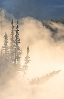Fog rising over the Bow River st sunrise. Castle Junction, Banff National Park, Alberta, Canada