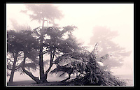 Morning mist in Gunnersbury Park, London - 1997