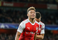 Alex Oxlade-Chamberlain of Arsenal celebrates as he scores the 3rd goal of the game to make it 3-0 during the UEFA Champions League match between Arsenal and PFC Ludogorets Razgrad at the Emirates Stadium, London, England on 19 October 2016. Photo by David Horn / PRiME Media Images.