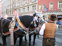 Horses in Oktoberfest attire - Munich, Germany