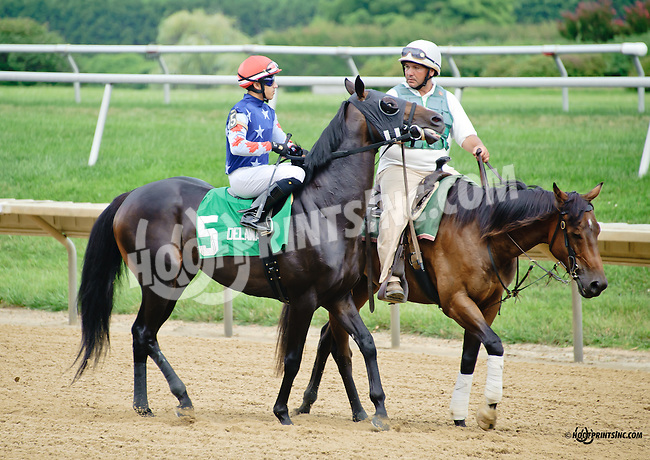 Lulu Le'Mon before The Nick Shuk Memorial Stakes at Delaware Park racetrack on 7/10/14