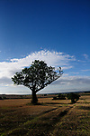 31st July 2017.  Bourne,  United Kingdom.A view of the Lincolnshire countryside on a summer morning. Jonathan Clarke/JPC Images