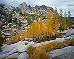 Wenatchee National Forest, WA<br /> Fall colors of grasses and larch on a granite hillside -  Enchantment lakes, Alpine Lakes Wilderness Area