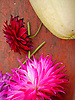 Dahlia & Squash<br />