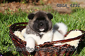 Bob, ANIMALS, REALISTISCHE TIERE, ANIMALES REALISTICOS, dogs, photos+++++,GBLA4291,#a#, EVERYDAY