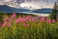 Summer landscape of fireweed on shore and icebergs at Bear Glacier Lagoon in Kenai Fjords National Park.  Kenai Penninsula, Summer, Alaska   <br /> <br /> Photo by Jeff Schultz/  (C) 2019  ALL RIGHTS RESERVED