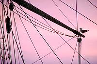 Tall Ship, Schooner, Main Mast, Sea Gull, Silhouette