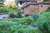 Carex, Sedge lawn substitute, , Coyote House, SITES® residential home with sustainable garden Santa Barbara California, Susan Van Atta landscape architect, Ken Radtkey architect.