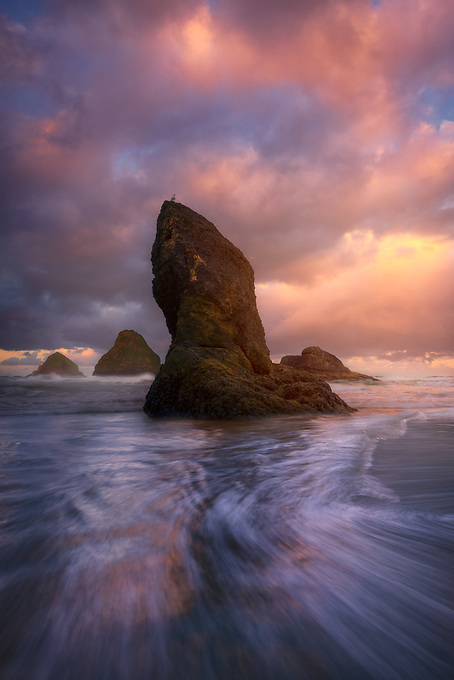 Soft light and the pastel colors of sunrise frame this sea stack on the Oregon Coast, with a bird perched on top.