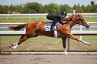 #154Fasig-Tipton Florida Sale,Under Tack Show. Palm Meadows Florida 03-23-2012 Arron Haggart/Eclipse Sportswire.