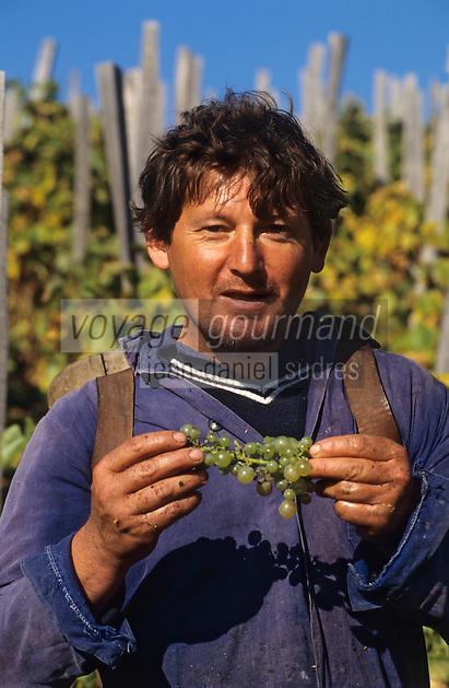 Europe/Hongrie/Tokay/Env Sarospatak: Les vignes du château Megyer - Vendanges manuelles - Portrait de vendangeur tzigane