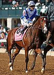 """October 07, 2018 : #8 Salvator Mundi and jockey Brian Hernandez Jr. the 28th running of The Dixiana Bourbon (Grade 3) $250,000 """"Win and You're In Breeders' Cup Juvenile Turf Division"""" for trainer Todd Pletcher and owner Eclipse Thoroughbred and Robert LaPenta at Keeneland Race Course on October 07, 2018 in Lexington, KY.  Candice Chavez/ESW/CSM"""