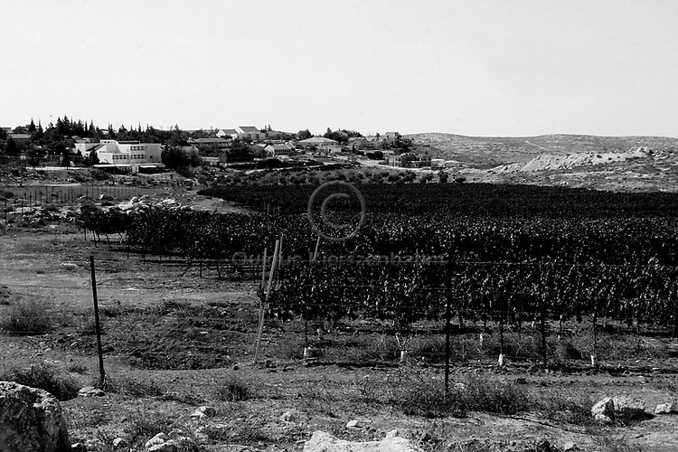 A general view of the vineyards of the Jewish settlement of Susyah, in the West Bank. Amnesty International has accused Israel of denying Palestinians adequate access to water while allowing Jewish settlers in the occupied West Bank almost unlimited supplies. Photo by Quique Kierszenbaum