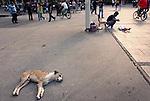 A dog naps in Macedonia Square in Skopje, Macedonia on Sunday, September 05, 2010.