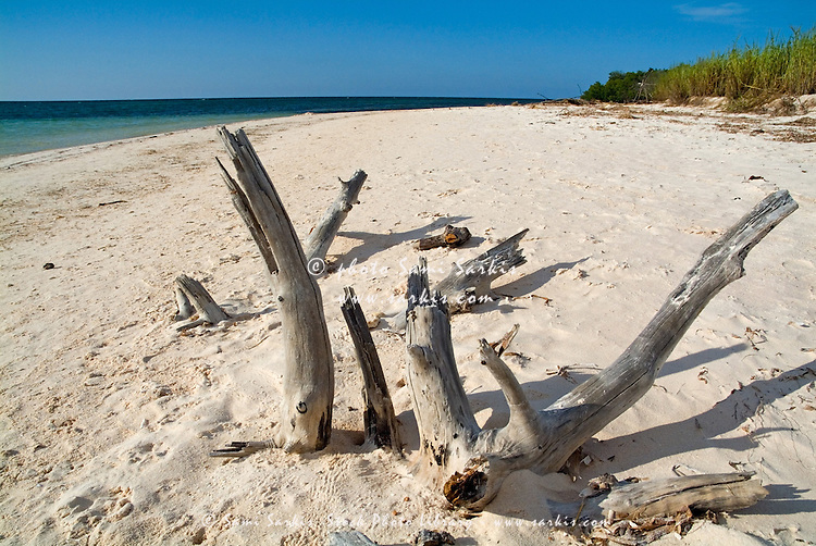 Driftwood sticking out of a white sand beach, Cayo Jutias, Cuba.