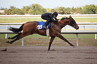 #99Fasig-Tipton Florida Sale,Under Tack Show. Palm Meadows Florida 03-23-2012 Arron Haggart/Eclipse Sportswire.