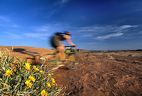 Mountain biker speeds by yellow Mules Ear flowers, Bartlett Wash, Moab, Utah