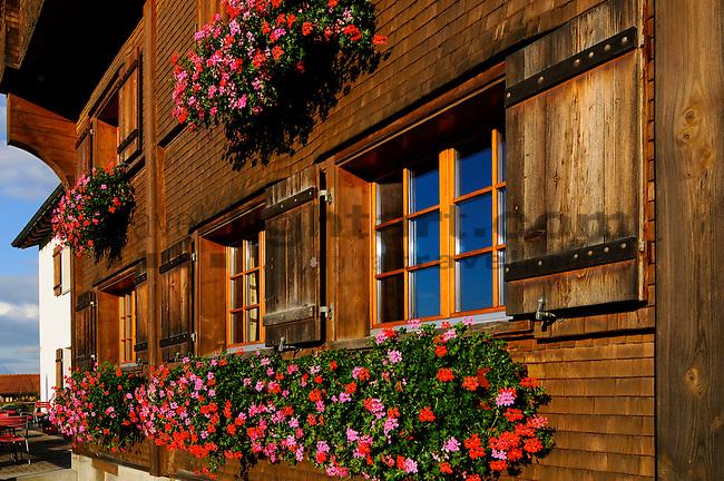 Fenster, Blumen, Restaurant Löwen, Schellenberg, Liechtenstein.