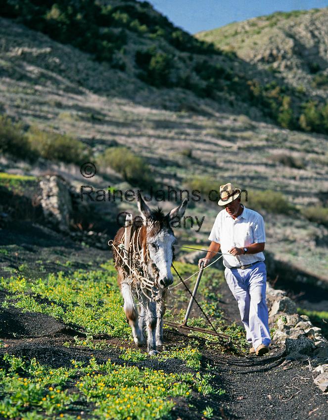 Spanien, Kanarische Inseln, Lanzarote, Bauer mit Esel bei der Feldarbeit   Spain, Canary Island, Lanzarote, farmer with donkey at field work