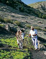 Spanien, Kanarische Inseln, Lanzarote, Bauer mit Esel bei der Feldarbeit | Spain, Canary Island, Lanzarote, farmer with donkey at field work