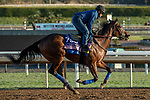 ARCADIA, CA  OCTOBER 30: Breeders' Cup Juvenile Fillies entrant Bast, trained by Bob Baffert, exercises in preparation for the Breeders' Cup World Championships at Santa Anita Park in Arcadia, California on October 30, 2019. (Photo by Casey Phillips/Eclipse Sportswire/CSM)