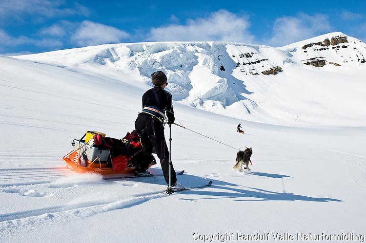 Skiløpere på vei fra Wahlenbergbreen, ned på Sveabreen. --- Skiers decending tovards Sveabreen.