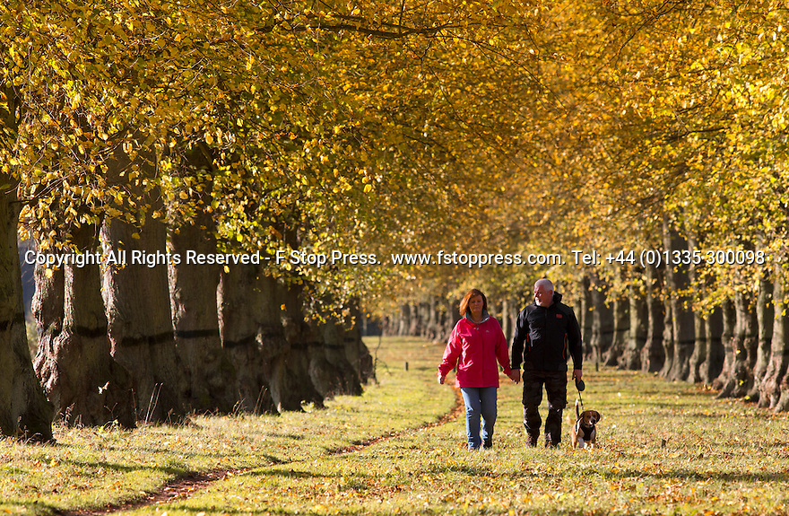 19/10/14<br /> <br /> Amanda and Bob Gillatt and their dog Alfie marvel at an autumn scene of yellow Lime trees that may look very different tomorrow after forecast storms are due to rip leaves branches and possibly fell the mature trees  along Lime Tree Avenue at Clumber Park, the longest of its kind in Europe, near Worksop, Nottinghamshire. Planted in 1840, it is two miles long with 1,296 common limes.<br /> <br /> In 1906 the trees were suffering from insect attack. To counter this a black grease bands was painted round the tree trunks to trap the insects, 100 years on the black bands are still visible.<br /> <br /> All Rights Reserved - F Stop Press.  www.fstoppress.com. Tel: +44 (0)1335 300098