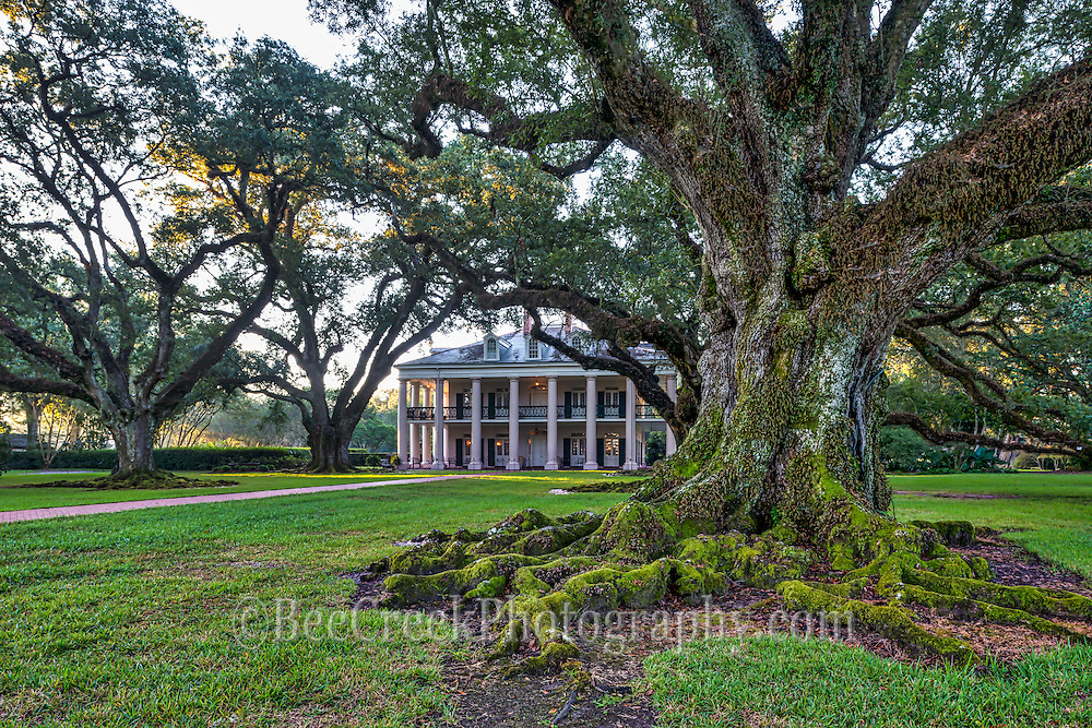 I liked this view of the Mansion and one of these majestic live oaks with it massive roots on display. These 300 year old oaks roots that grow on the plantation are a wonderful site just as the sunrise begins to light up the house with the morning light.