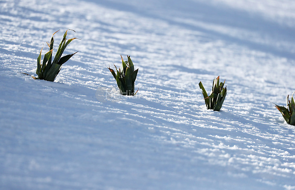 The tracks are marked with small plants in the Olympic Phoenix Snow Park in Pyeongchang, South Korea, 07 February 2018. The Pyeongchang 2018 Winter Olympics take place between 09 and 25 February. Photo: Daniel Karmann/dpa /MediaPunch ***FOR USA ONLY***