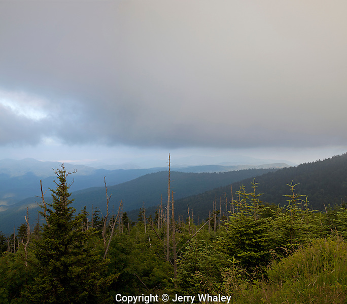 Appalachian Trail; Clingman's Dome; Dead Trees, Great Smoky Mountains NP