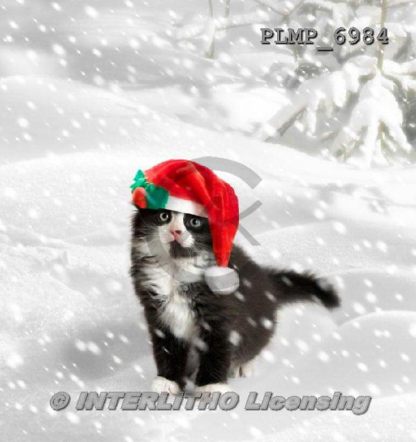 Marek, CHRISTMAS ANIMALS, WEIHNACHTEN TIERE, NAVIDAD ANIMALES, photos+++++,PLMP6984,#XA# cat  santas cap,