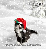Marek, CHRISTMAS ANIMALS, WEIHNACHTEN TIERE, NAVIDAD ANIMALES, photos+++++,PLMP6984,#XA# cat  santas cap,