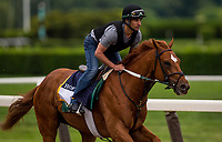 ELMONT, NY - JUNE 07: Hofburg gallops in preparation for the 150th Belmont Stakes at Belmont Park on June 07, 2018 in Elmont, New York. (Photo by Alex Evers/Eclipse Sportswire/Getty Images)