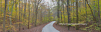 63895-14310 Road through trees in fall at LaRue-Pine Hills, Shawnee National Forest, IL